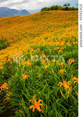 台灣花蓮富里六十石山金針花海Asia Taiwan Hualien Mountains 49362928