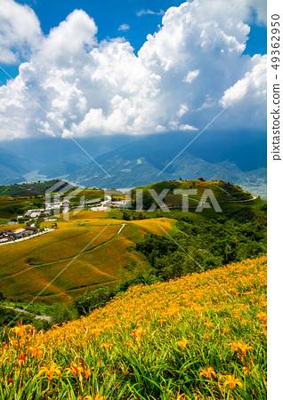 台灣花蓮富里六十石山金針花海Asia Taiwan Hualien Mountains 49362950