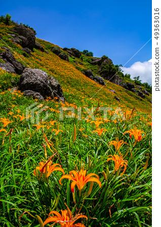 台灣花蓮富里六十石山金針花海Asia Taiwan Hualien Mountains 49363016