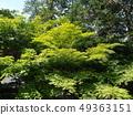 Nanzenji Honbo with fresh greenery 49363151