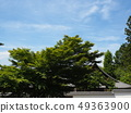 Nanzen Temple grounds with fresh greenery 49363900