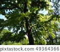 Kyoto Green Botanical Garden 49364366