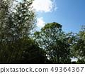Kyoto Green Botanical Garden 49364367