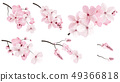 Dark and light pink sakura  flowers. 49366818
