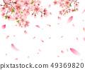 ซากุระและกลีบเต้น 49369820
