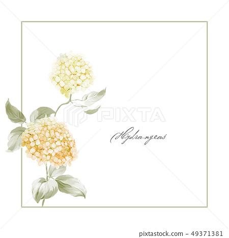 美麗的繡球花和手繪水彩花 49371381