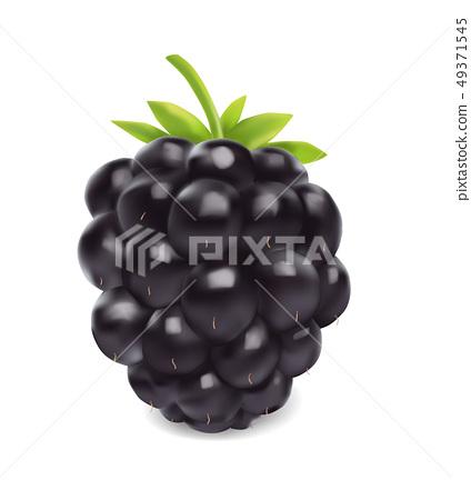 Blackberry. Sweet fruit. 3d vector icon. Realistic illustration 49371545