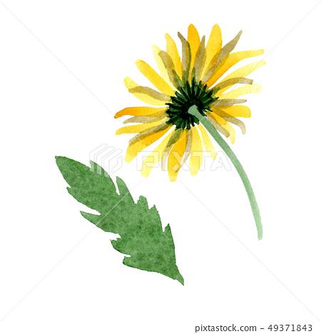 Yellow Daisy Floral Botanical Flower Stock Illustration 49371843 Pixta