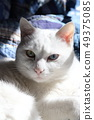 白猫 49375085