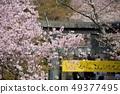 這棵櫻花盛開 49377495