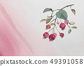 June Berry Botanical 49391058