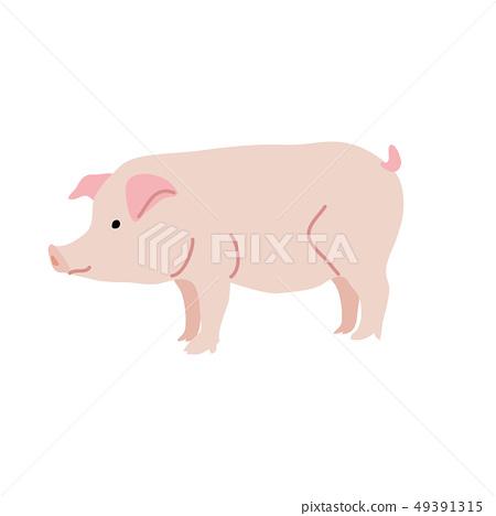 Pig illustration 49391315
