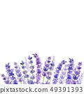 라벤더 꽃 프레임입니다.- 웨딩,광고,표지 49391393
