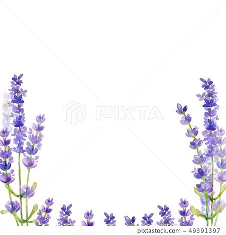 라벤더 꽃 프레임입니다.- 웨딩,광고,표지 49391397