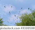 鳥和天空 49399588