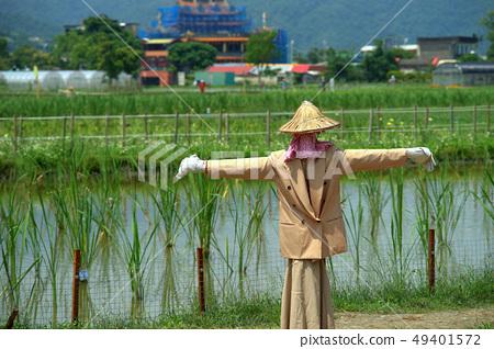 稻田 49401572
