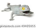 closeup of rubber lizard on white background 49405655