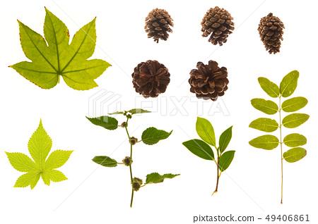 꽃, 나뭇잎, 풀잎, 야생화, 잔디, 식물의 모음 49406861