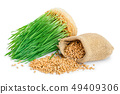 Wheat green sprouts, wheat seeds in the burlap bag isolated on white background 49409306