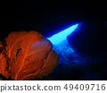수중 동굴 붉은 산호 사이판 그로 토 49409716