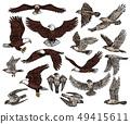 Birds of prey, predatory eagle and hawk falcons 49415611