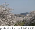 佐保川 따라 벚꽃과 와카 쿠사 49417531