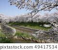 佐保川 따라 벚꽃 49417534