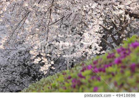 벚꽃이 있는 풍경 49418696