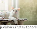 The white cat lying on the cat tree. 49422770