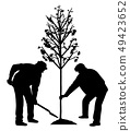 Two men planting a tree 49423652