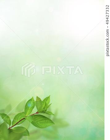 背景 - 新鮮的綠 - 春 - 夏天 - 陽光 49427332