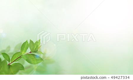 背景 - 新鮮的綠 - 春 - 夏天 - 陽光 49427334