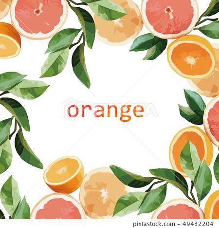 橙子和葉子插畫 49432204