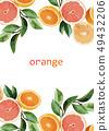 橙子和葉子插畫 49432206