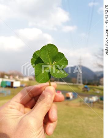 Five-leaf clover 49434270