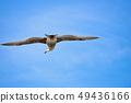 Seagull 49436166