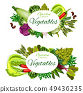 Vegetables and herbs. Healthy vegetarian food 49436235
