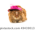 red cat in a pink hat isolated 49439013