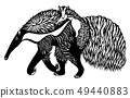 Anteater with a cub on the back 49440883