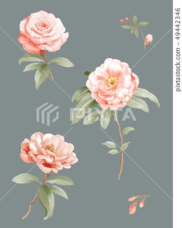 色彩柔和的山茶花和水彩花朵 49442346