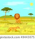 Wildlife Dangerous Animal in Savannah, Lion Vector 49443075