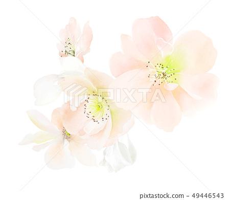 顏色柔和的手繪水彩花朵 49446543