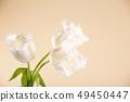 Light background and three white fresh beautiful 49450447