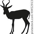 Springbok silhouette 49452913