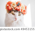 Beautiful Calico Cat with a wreath on his head. Cute kittty in a flowers diadem on her head sits in 49453155