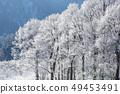 무빙 나무 무빙 사 토야마의 겨울 겨울의 꽃 49453491