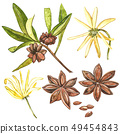 Star anise plants isolated on white background. Watercolor botanical illustration of culinary and 49454843