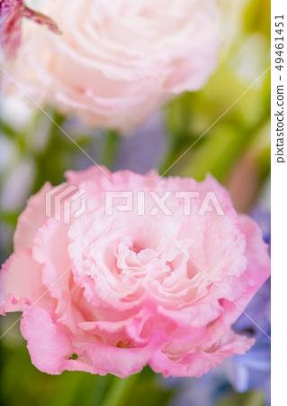 被切開的花的桃紅色綠松石花,土耳其風鈴草,桃紅色康乃馨,禮物,母親節,花束 49461451
