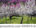 Shinshu Nagano Prefecture Nagano City Shinshu Shincho Rokko Plum Garden 49465416