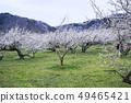 Shinshu Nagano Prefecture Nagano City Shinshu Shincho Rokko Plum Garden 49465421